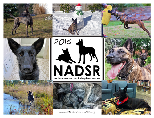 NADSR - News & Events